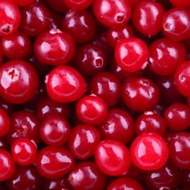 Американска червена боровинка