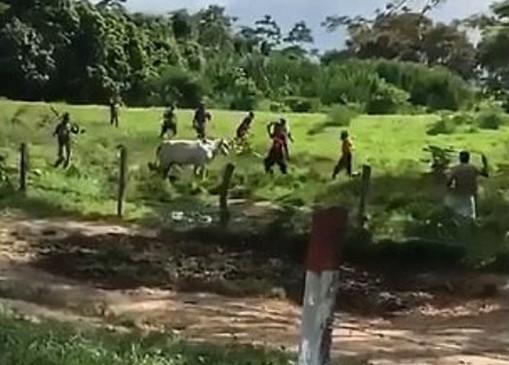 Βίντεο-σοκ από τη Βενεζουέλα: Πεινασμένοι πολίτες πετροβολούν αγελάδα για να βρουν λίγο κρέας