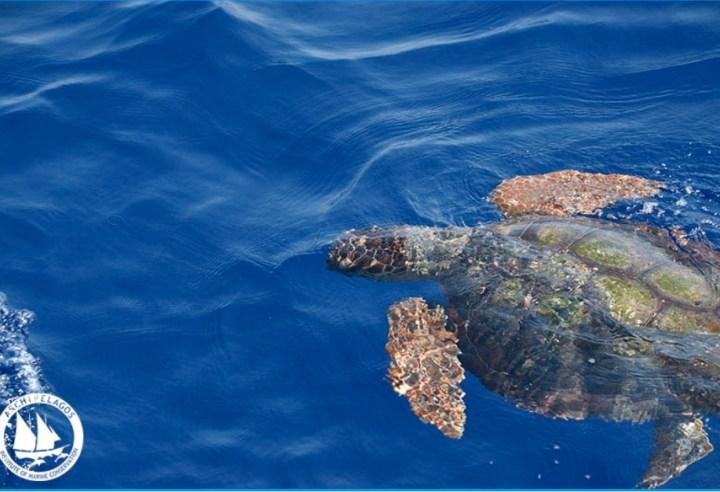 Οδηγίες από το Δήμο Λουτρακίου Αγίων Θεοδώρων για την εμφάνιση Θαλάσσιας Χελώνας στην περιοχη