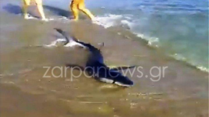 Βίντεο-σοκ: Καρχαρίας βγήκε σε παραλία των Χανίων