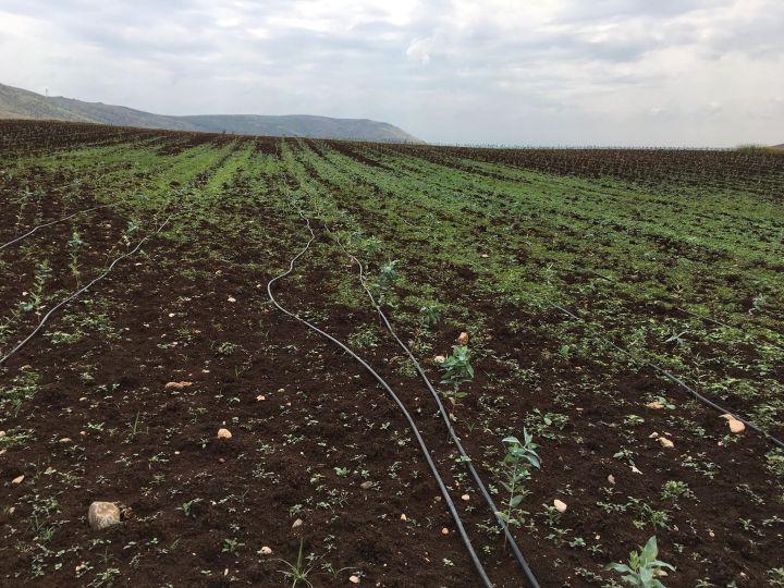 Ο Κορίνθιος επιχειρηματίας που κατακτά την αγορά με την καλλιέργεια ευκάλυπτου