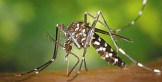 Δύο νεκροί από τον ιό του Δυτικού Νείλου στην Αττική