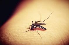 Γιατί μας τσιμπούν τα κουνούπια