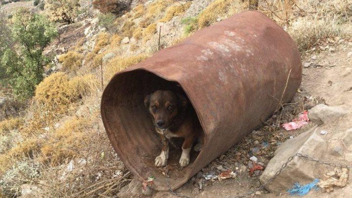 Κτηνωδία στη Σητεία: Κρατούσε πέντε σκύλους δεμένους σε βαρέλια