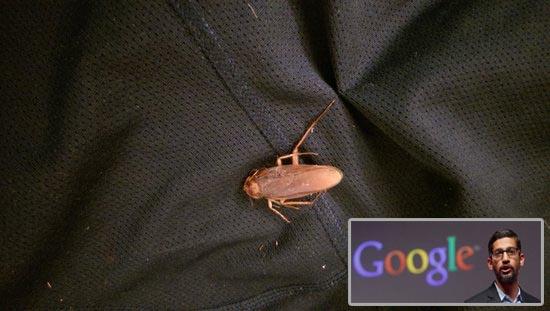 Η «θεωρία της κατσαρίδας» και πώς θα σας αλλάξει τη ζωή