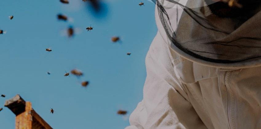 Πώς θα είναι ο κόσμος μας αν εξαφανιστεί η μέλισσα