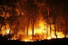 Πυρκαγια στο Πραθι των Αγιων Θεοδωρων