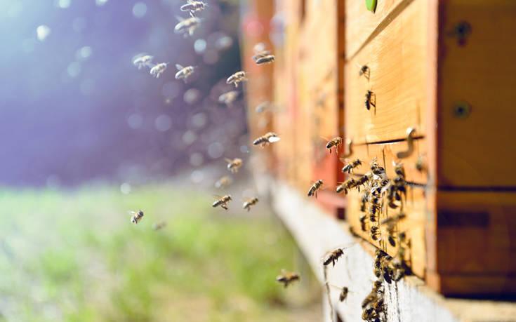 Φρένο σε γνωστό εντομοκτόνο λόγω σοβαρών επιπτώσεων στις μέλισσες