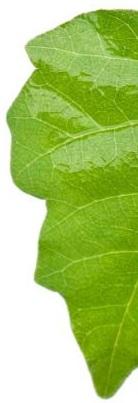 kontakteksem kan orsakas av växter