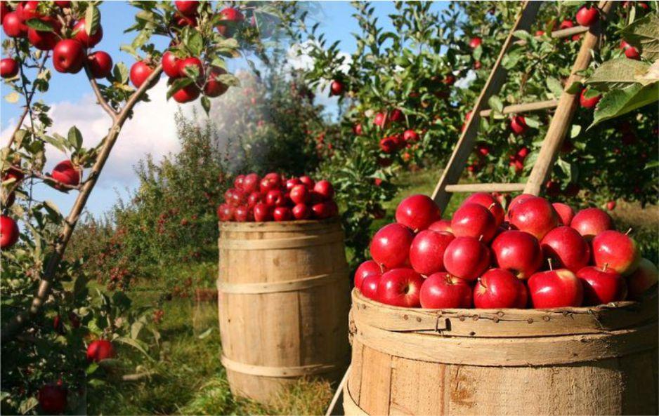 agrowisata petik apel malang