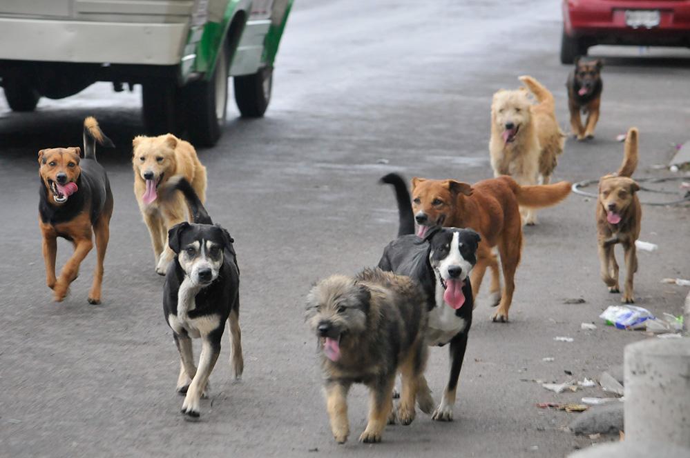 Perros sin nombre – Gabriel Rodríguez Liceaga