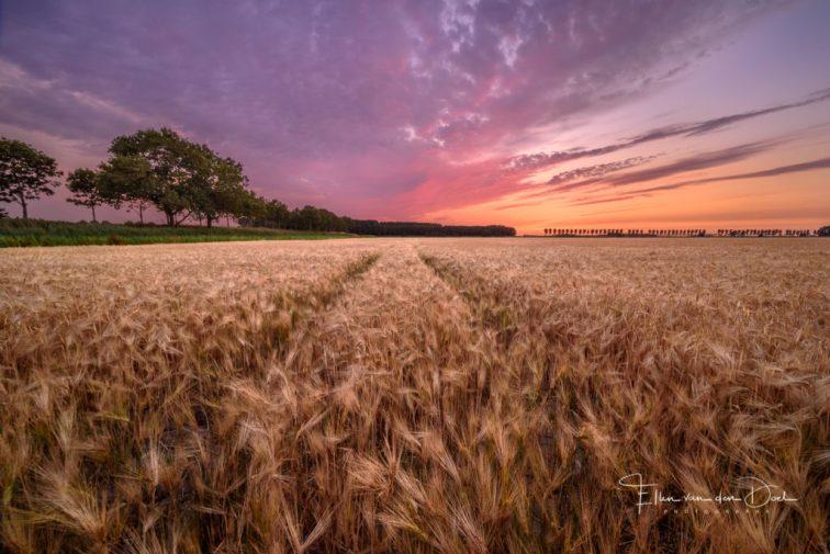 zomer zonsondergang