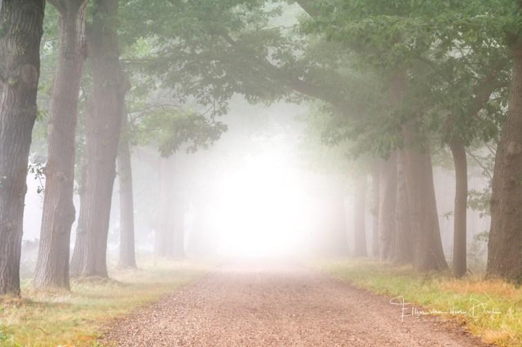 Mistige bos laan bij de Sallandse Heuvelrug