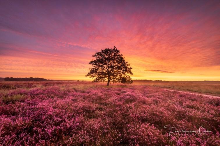 Intens gekleurde zonsopkomst