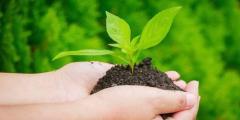 تعريف اقتصاد البيئة ماهية التنمية المستدامة