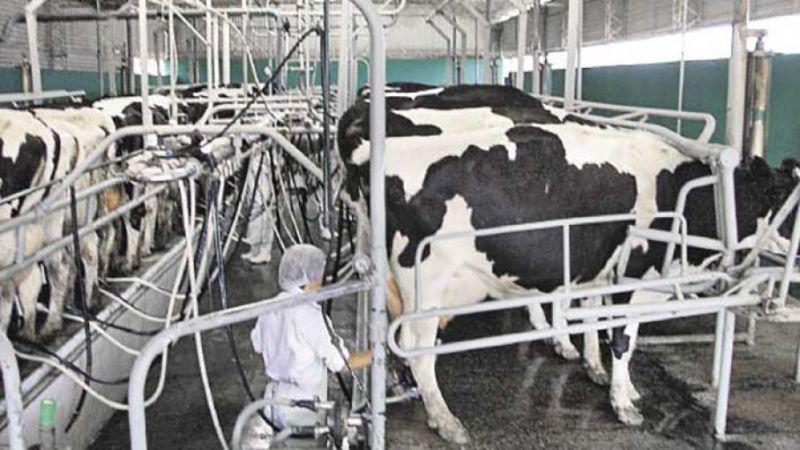 La difícil situación del sector productivo de leche