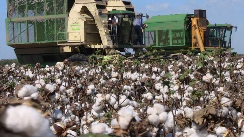 Las inundaciones en Chaco ponen en riesgo la cosecha de soja y algodón
