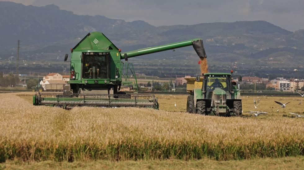 Por irregularidades, retienen 2.200 toneladas de granos en Córdoba y Entre Ríos