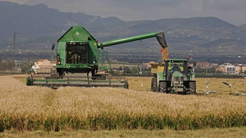 Suba del precio de productos agroindustriales
