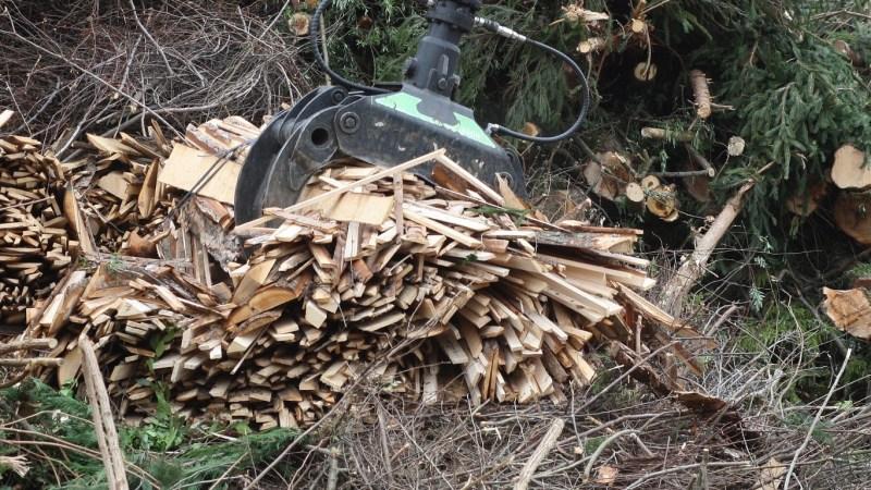 China se anota en la carrera verde: cada vez produce más biomasa