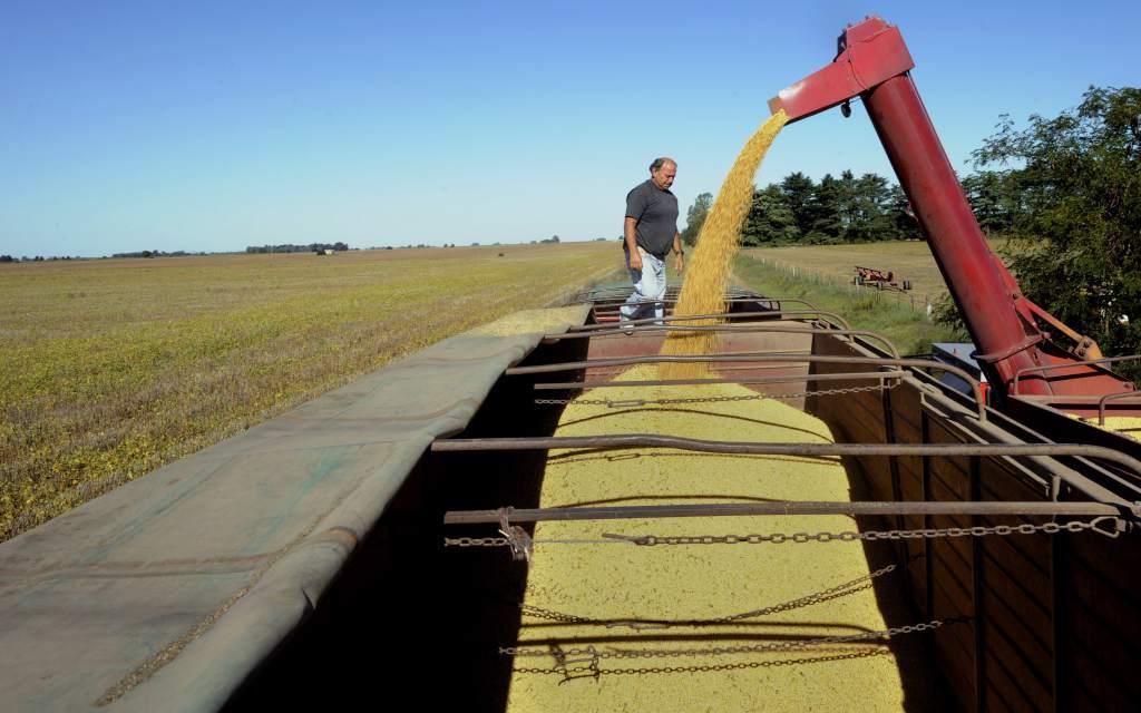 Mejoras en la actividad de granos