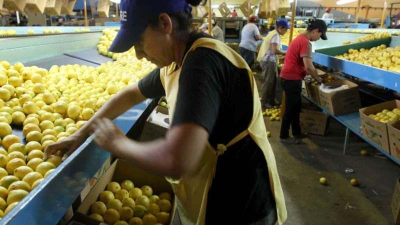 Los limones y los langostinos