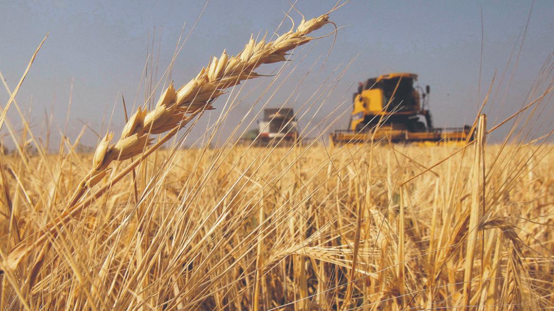 El trigo aumentó su valor