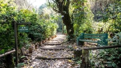 Photo of Yerba Buena: el Jardín Botánico trabaja para su reapertura