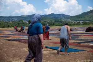 قطع السجاد تغطي حقول دوشاما في تركيا 2