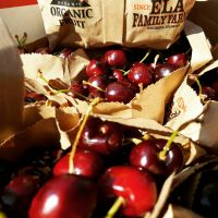 ELA sweet cherries in bags