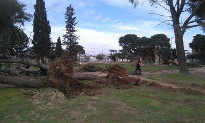 tala de árboles de Sergio Bordoni