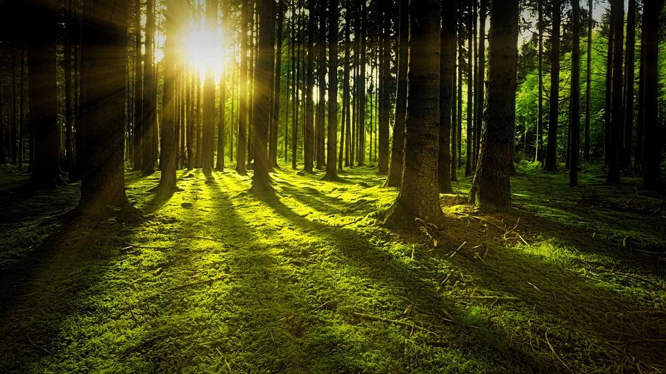 bosque agua y sostenibilidad aneabe
