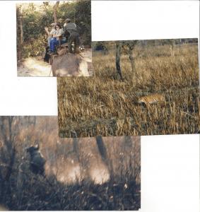 tiger kill nepal 2000