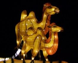 Longleat camels