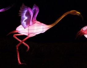 Longleat flamingo 2