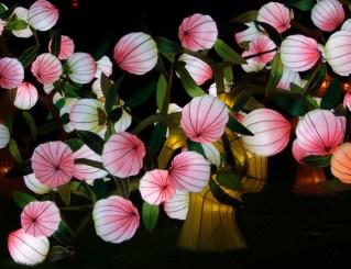 Longleat flowers 6