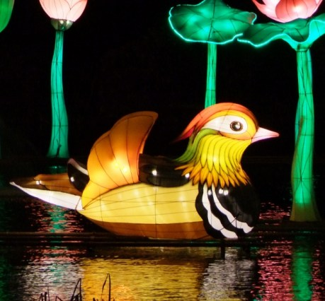 Longleat mandarin duck