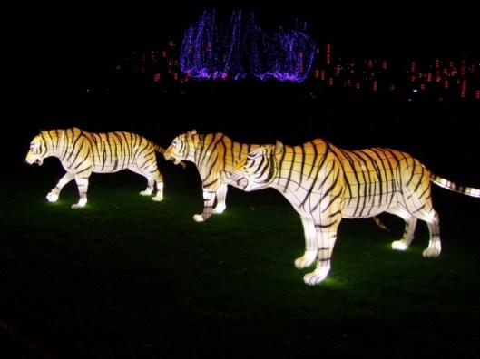 Longleat tigers