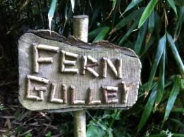 Fern Gulley