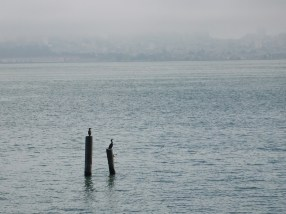 Two cormorants waiting patiently