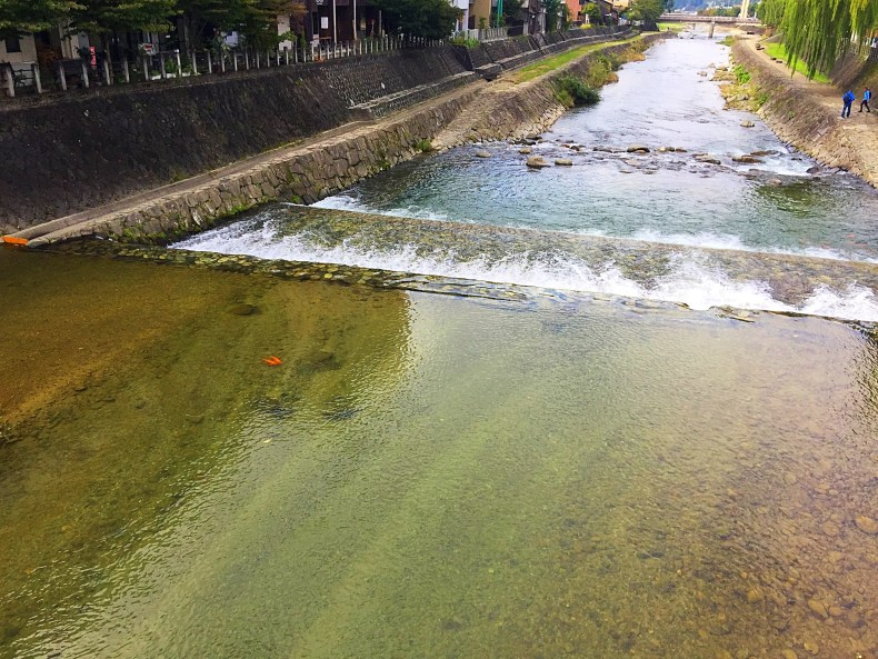 We see so many Koi fish swim freely in the rivers, some even in the drains. In my country, these fishes are expensive to buy!