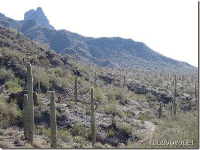 Peaks and pools. Picacho Peak and Catalina State Parks AZ (1/6)