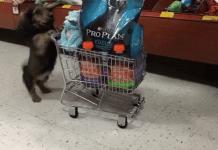 12 gif-ri cu câini