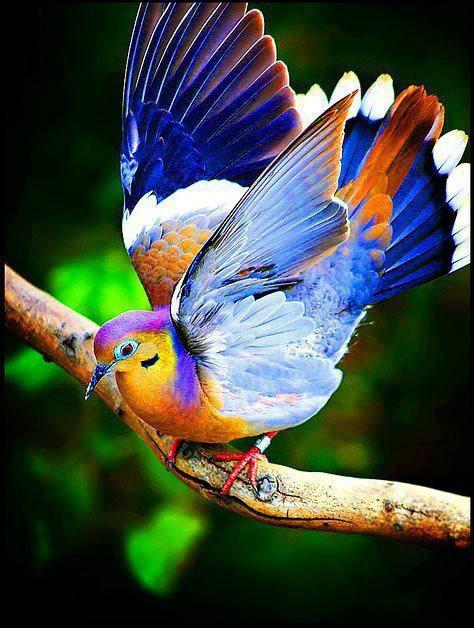 Inteligența și frumusețea animalelor-Galerie FOTO 6