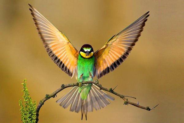 Inteligența și frumusețea animalelor-Galerie FOTO 8