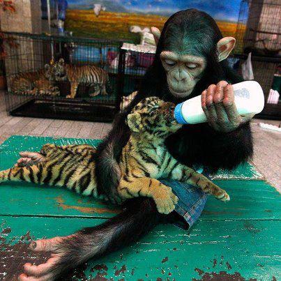 Inteligența și frumusețea animalelor-Galerie FOTO 15