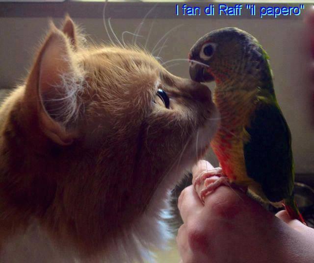 Inteligența și frumusețea animalelor-Galerie FOTO 23