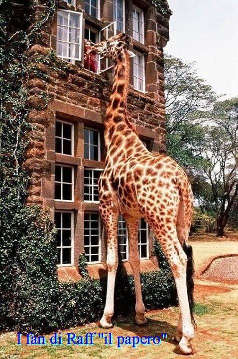 Inteligența și frumusețea animalelor-Galerie FOTO 24