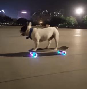 Un Câine pe skateboard (Video) 1