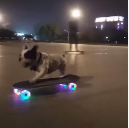 Un Câine pe skateboard (Video) 2